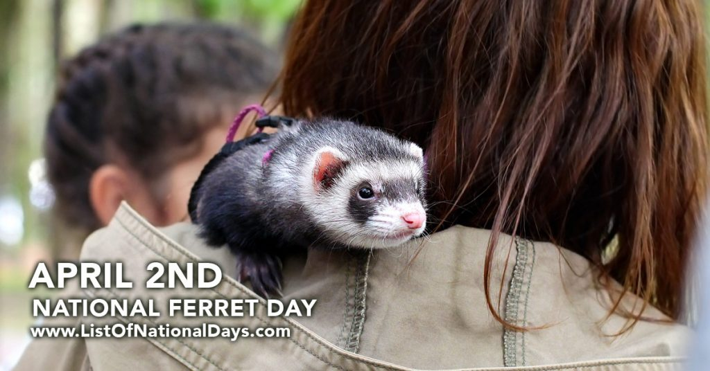 NATIONAL FERRET DAY
