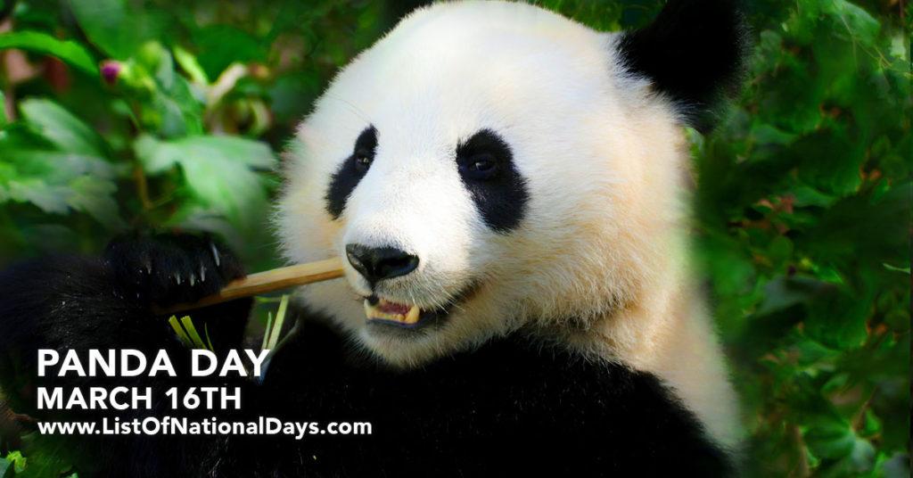 A panda eating bamboo